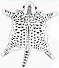 katten tabby  spotted