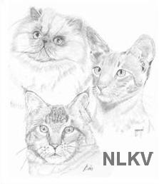 logo NLKV