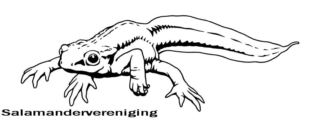 beschermde salamanders in nederland